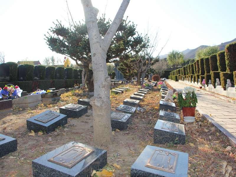 天寿陵园树葬