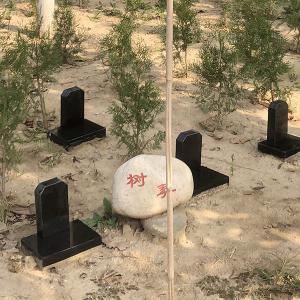 施孝园树葬