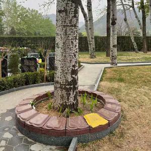 仁仕区树葬