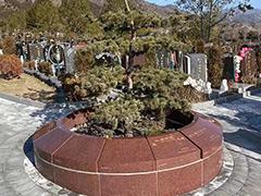 北京哪里有树葬?人死后在北京树葬需要多少费用?