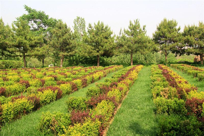 灵山宝塔陵园绿化