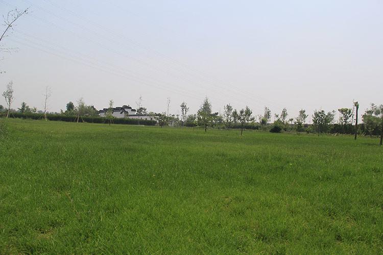 公墓草坪绿化