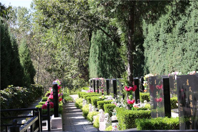 八达岭陵园墓区绿化