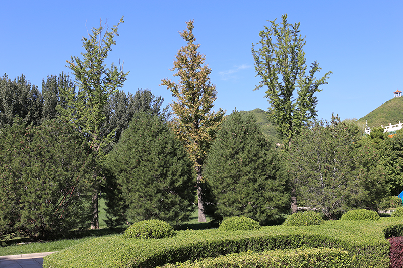 天寿陵园墓区绿化