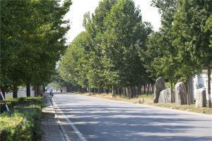 公墓主通道